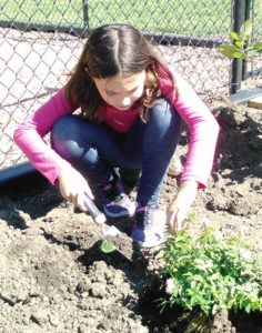 Planting Spring Flowers - Helping hands